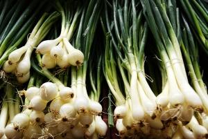 still-onion-1419686-m