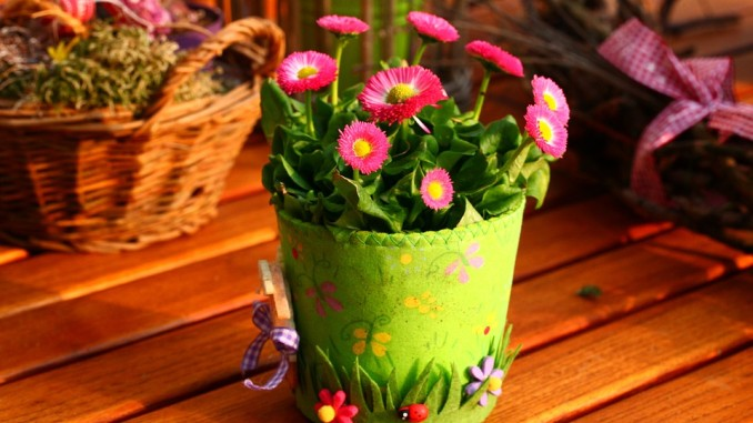 rostlina v květináči