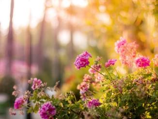 Květiny na zahradu